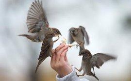 Koşanlar Kuşlar Mı?